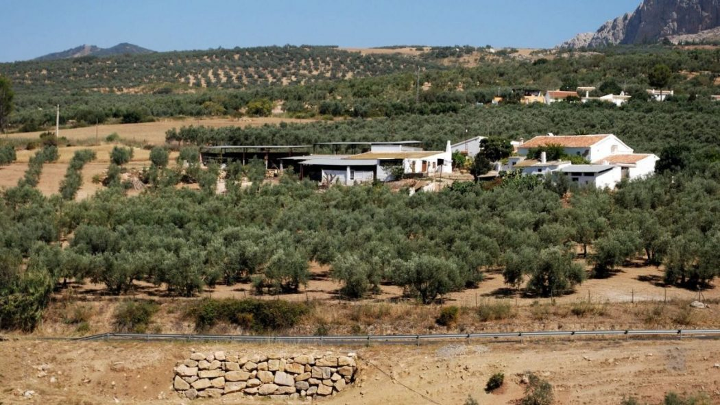 Los pequeños productores de aceite de oliva de España apuestan por las biorrefinerías