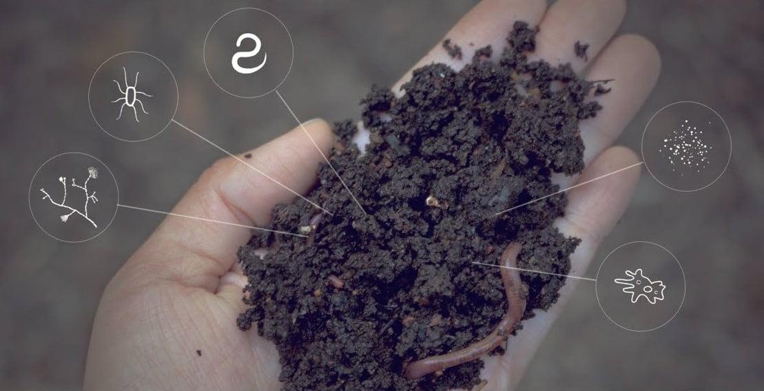 Científicos logran una desinfección biológica del suelo que combate malezas y aumenta la disponibilidad de fósforo
