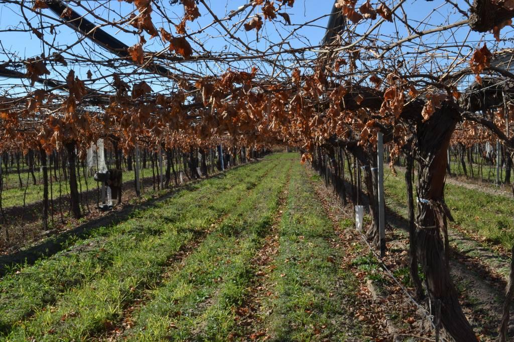 Innovación y respeto por la biodiversidad, los secretos de la familia Zuccardi para elaborar vinos sostenibles