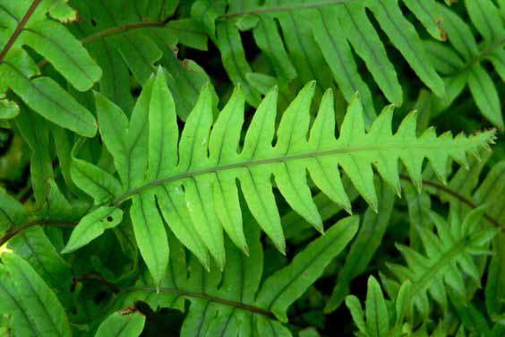 La calaguala y otras yerbas, un canto a la vida