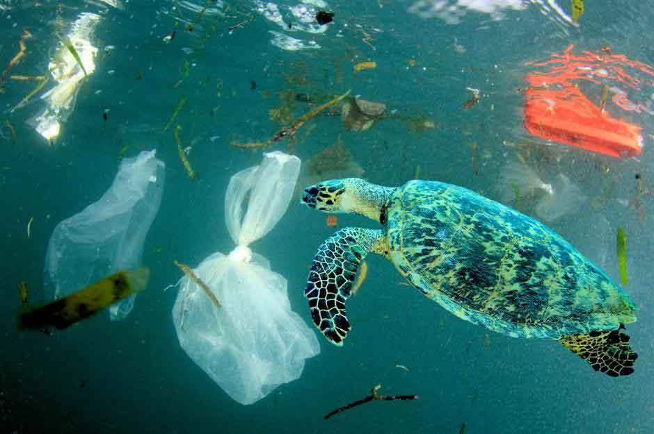 Preparan un ejercito de 'microlimpiadores' de bioplásticos con microbios para combatir la contaminación plástica de los océanos