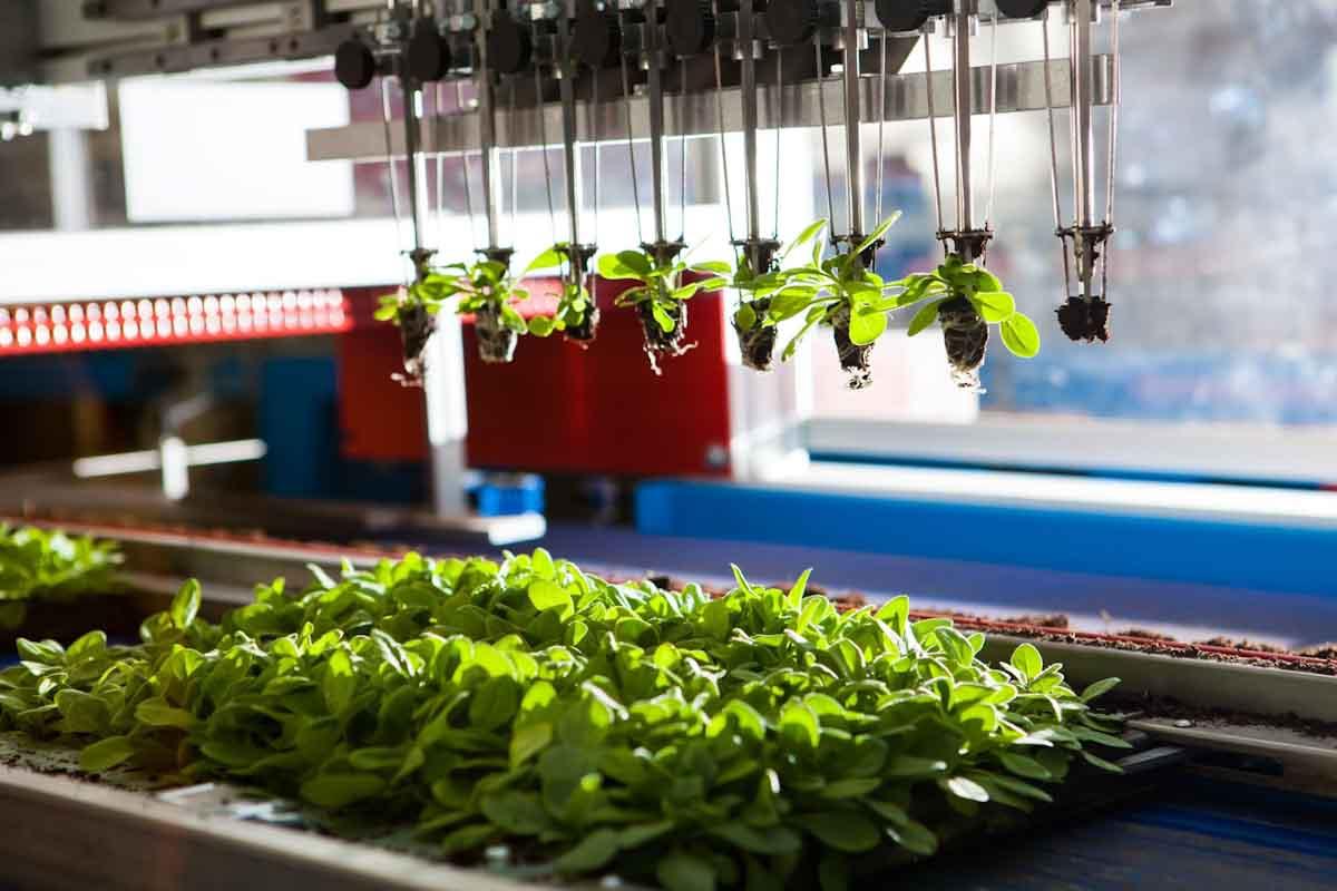 IICA enfatiza la importancia de reposicionar los temas de ciencia, tecnología y desarrollo para la transformación de la agricultura en las Américas