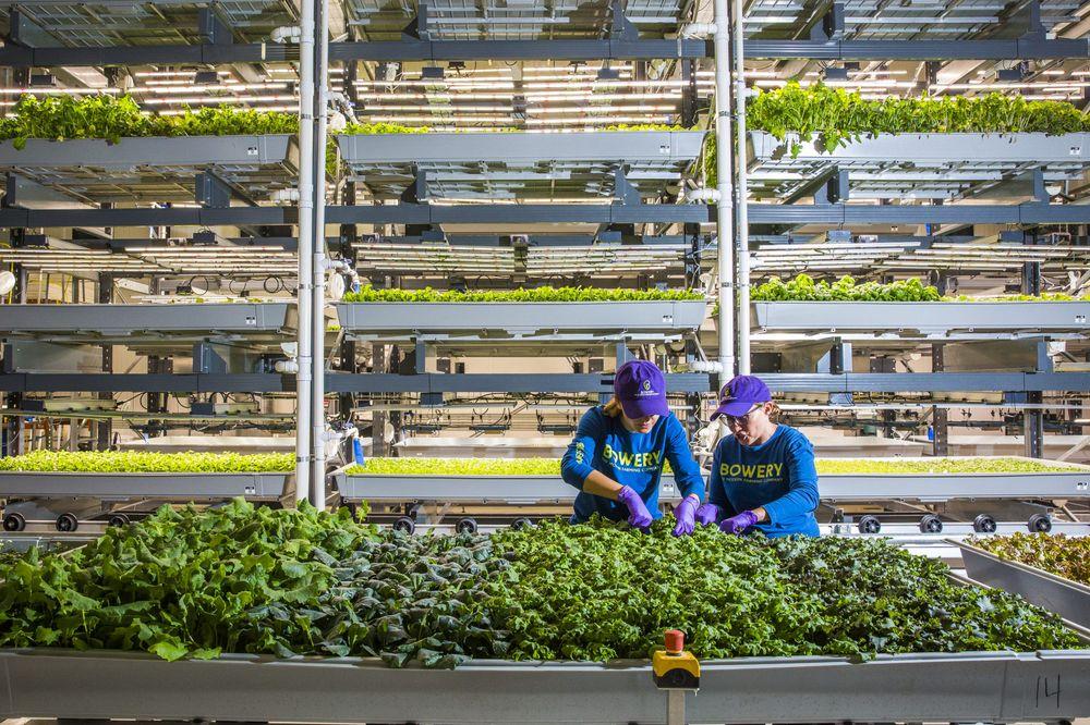 La agricultura urbana florece en el este de EEUU