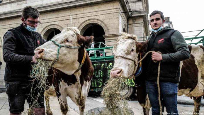 Polémica en Francia por decisión del Alcalde de Lyon de eliminar la carne en los almuerzos escolares