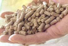 Cargill y BASF profundizan su alianza para proveer soluciones innovadores en la nutrición ganadera