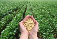 El sistema de abastecimiento de soja sustentable se fortalece