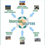Biomass as Energy Resources