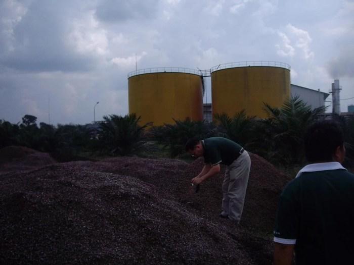 palm-biomass
