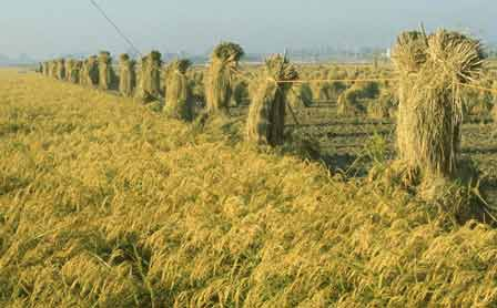 Biomass resources are underutilized across China