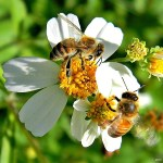 Bring New Life to Your Garden by Making it Bee-friendly