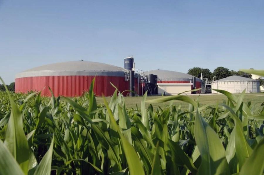 biogas-crop