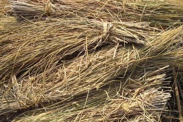 rice-straw-biogas