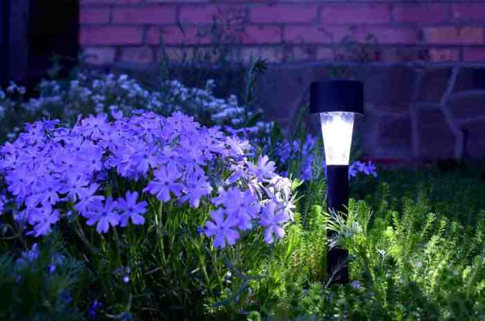 landscape-solar-lights