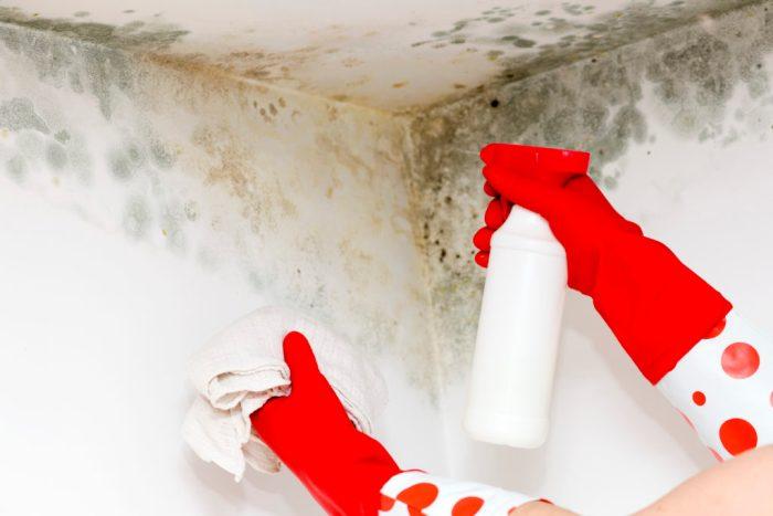 Eco-Friendly Ways to Get Rid of Bathroom Mold
