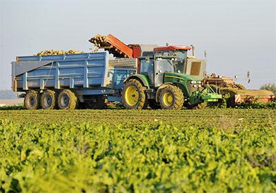 Recolte mecanisee, avec tracteur, arrachage des plants de betteraves destinees a la production de Bio Ethanol