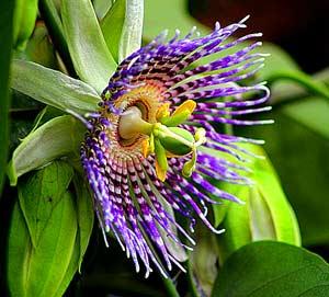"The tropical … continue reading ""tropical. Best 18 Amazon Rainforest Plants Flowers Updated Rainforest Plants"