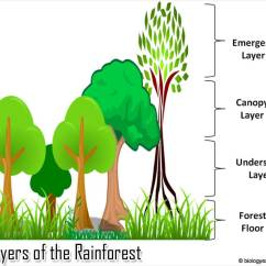 Amazon Rainforest Layers Diagram Ryobi Tiller Fuel Line Of The Animals Biology Explorer Explore