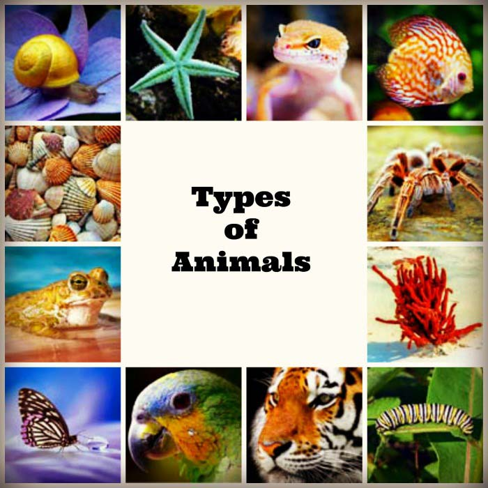 types of animals and