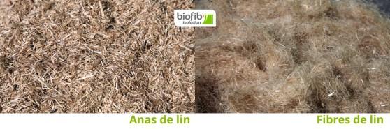 Anas et fibres de lin