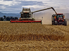 Harvest time by joinash via Flickr.