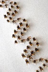 Bumblebee DNA