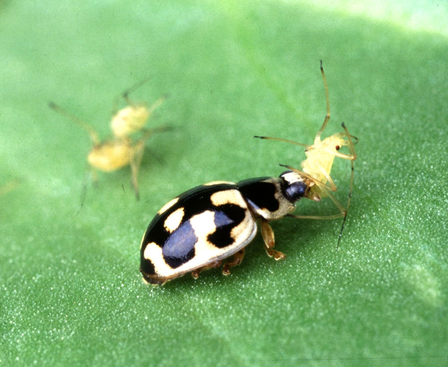 Biological Pest Control Basics
