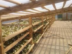 Greenhouse Orange
