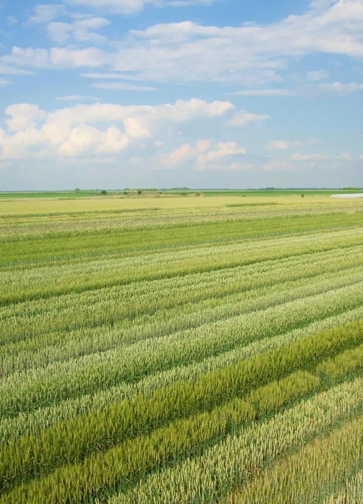 Biogranum field rows