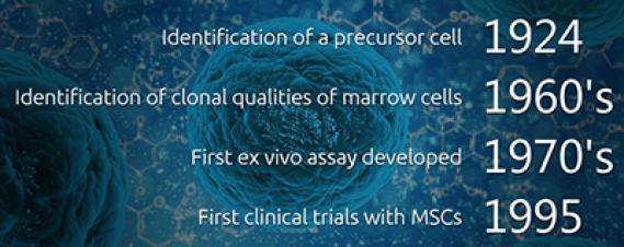 History of Mesenchymal Stem Cells (MSC)