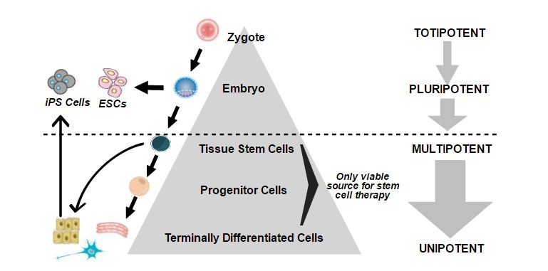 Direct Cell Reprogramming Diagram