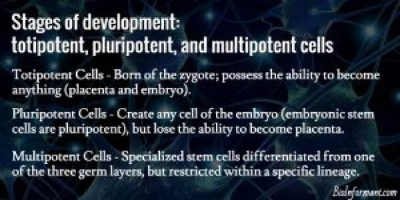 Totipotent Pluripotent Multipotent