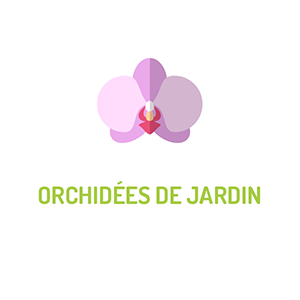 Orchidées de jardin