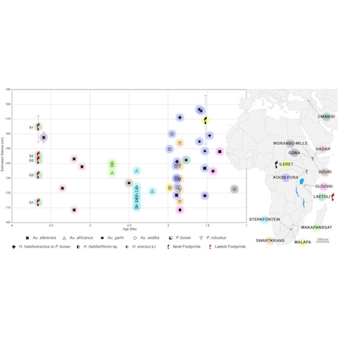 New Laetoli Footprints and Hominin Body Size