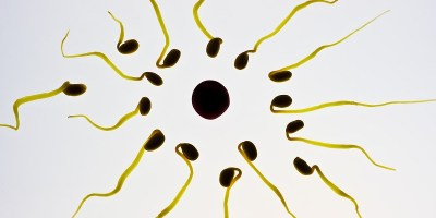 Comprendre le fonctionnement du cycle menstruel