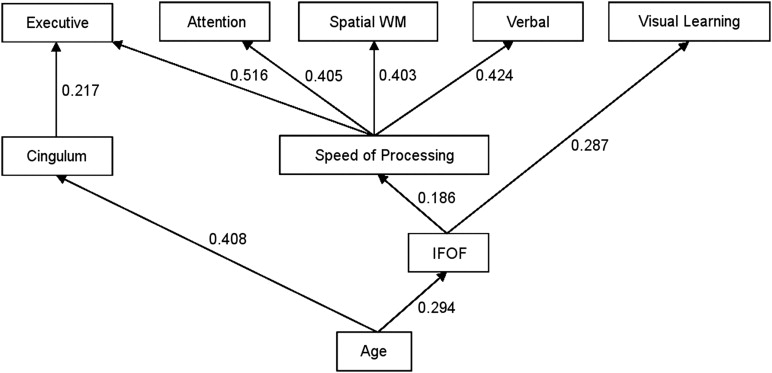 Age-Related Differences in White Matter Tract