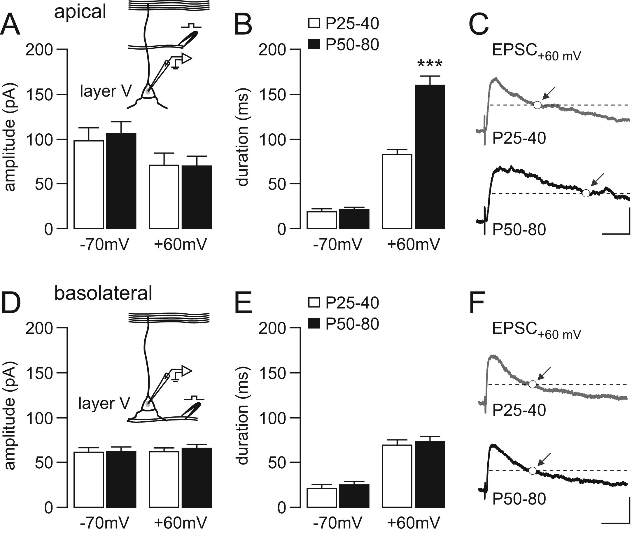 Late Adolescent Expression of GluN2B Transmission in the