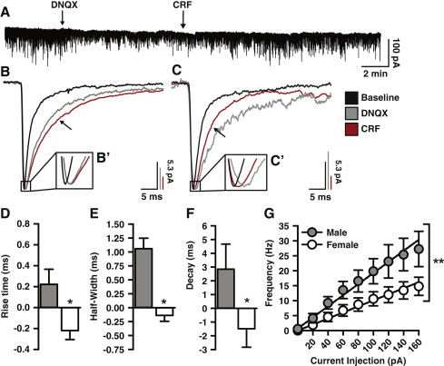 Sex Differences in Corticotropin-Releasing Factor Receptor
