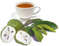 La tisane ou décoction de feuilles de graviola corossol est un anticancer naturel