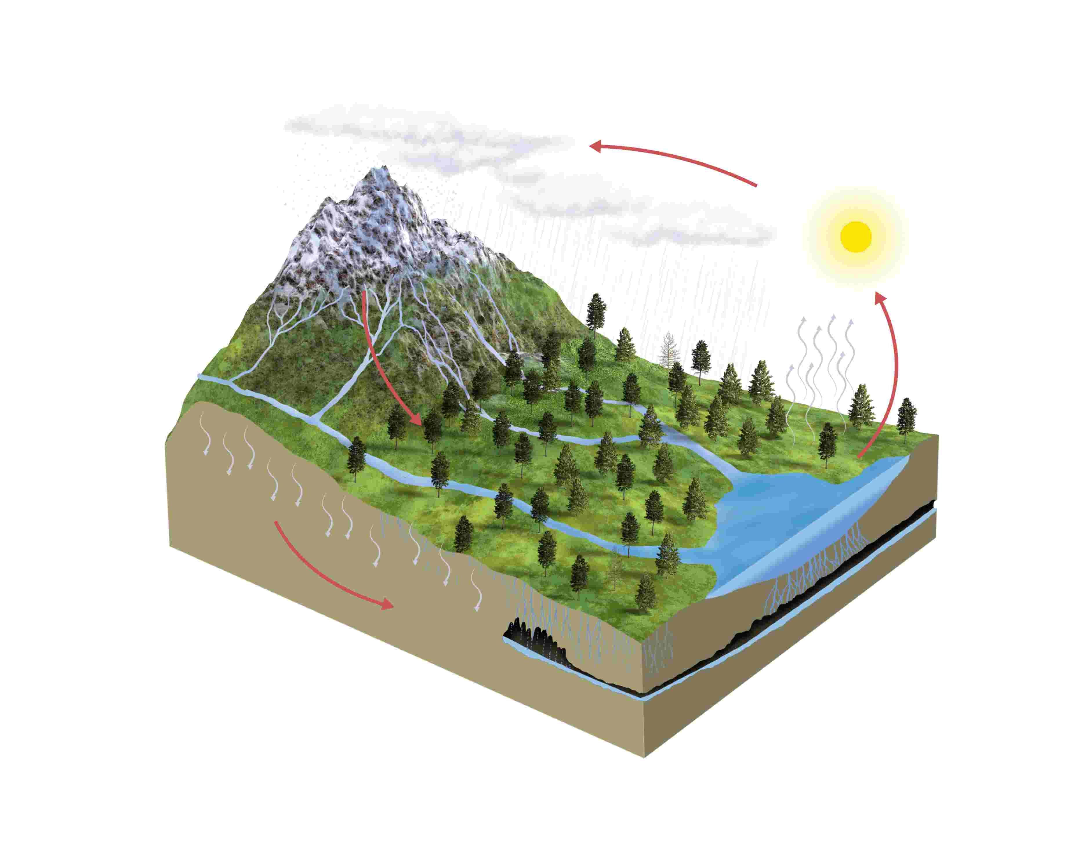 water cycle diagram with questions wiring hotpoint aquarius tumble dryer biogeochemical cycles
