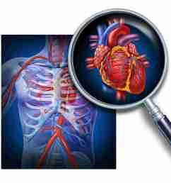circulation diagram of organ and body [ 3527 x 3401 Pixel ]