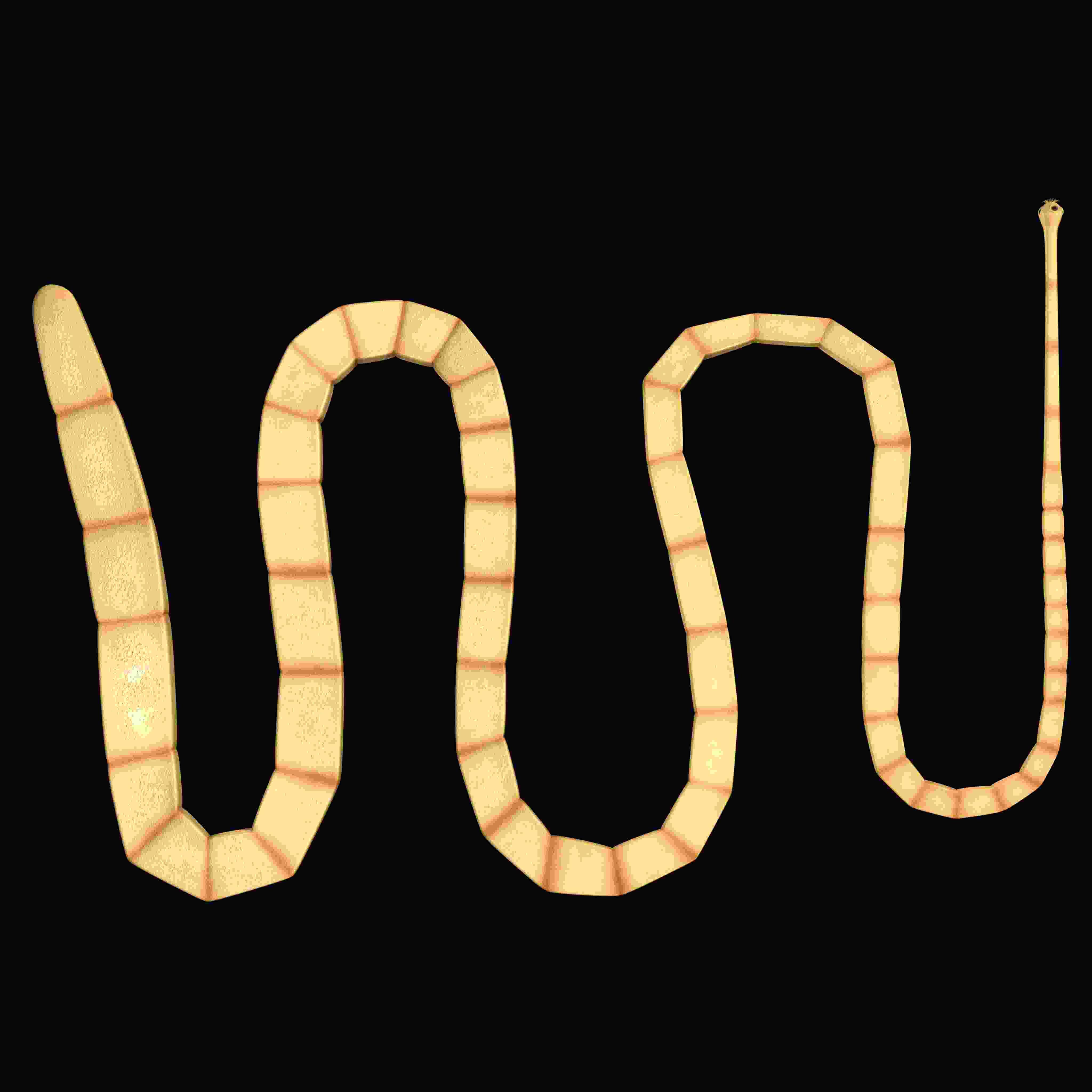 Worm Diseases