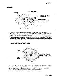 euglena cell diagram with labels 97 chevy s10 stereo wiring biology protista amoeba malaria paramecium spirogyra feeding breathing