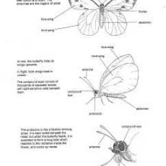 Cricket Life Cycle Diagram 1989 Harley Davidson Softail Wiring Biology Insect Cycles Information Drawings By D G Mackean Butterfly 2