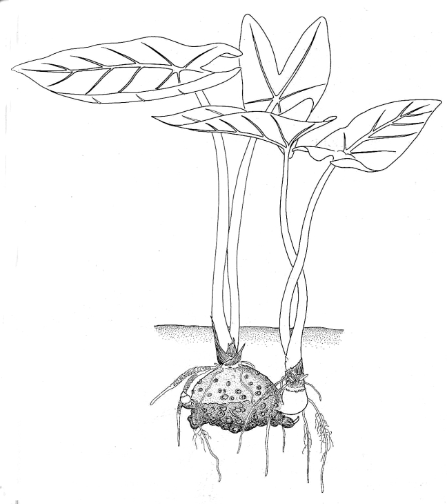 Plant Sprout Coloring Pages Coloring Pages
