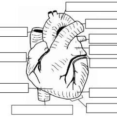 Label Heart Diagram Worksheet Answers Isolator Wiring Notes And Circulatory System Labeling Practice External