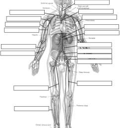 pig diagram label [ 928 x 1160 Pixel ]