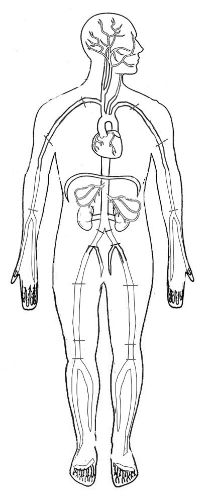 Major Arteries Coloring