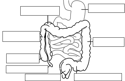 Notes: Digestive System