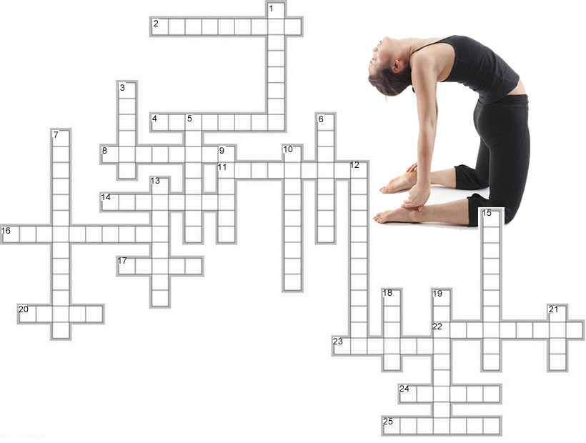 Muscle Anatomy Crossword
