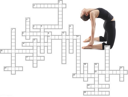 Muscle Anatomy Crossword